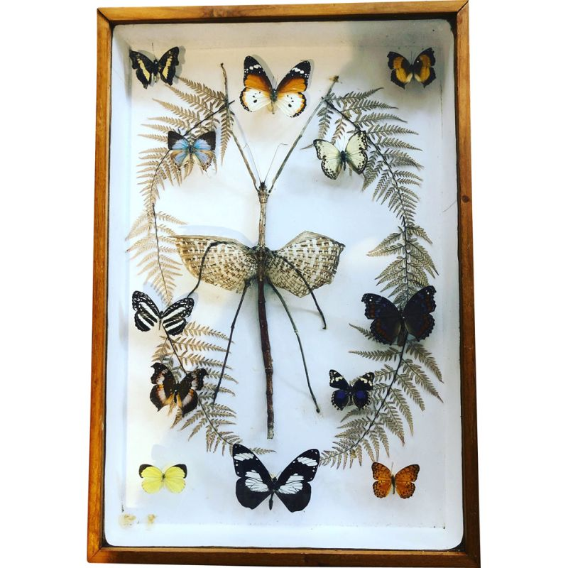 Vintage butterfly box 1960