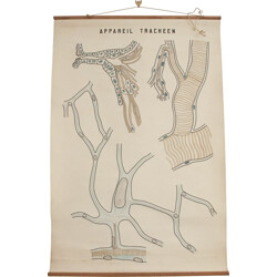 """Mid century anatomical """"tracheal system"""" poster - 1950s"""