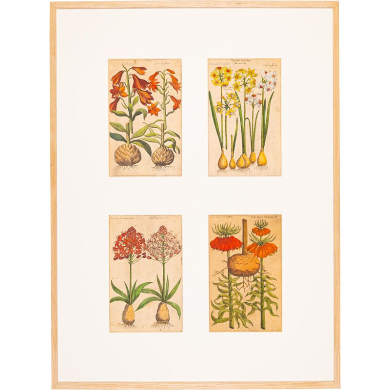 Vintage botanical drawing board in colored copper plate